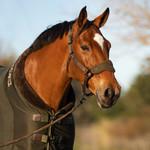 Le Mieux Luxe Fleece Rug Oak Green/Brown  6'6/145/198
