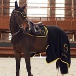 Vestrum Chicago Saddle Pad Dressage