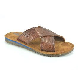 Australian Slipper Australian