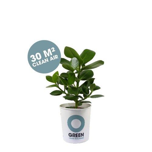 Ogreen Ogreen Champ clean machine 30 m2 clean air*