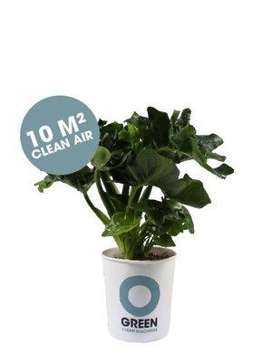 Ogreen Ogreen Superb clean machine  10 m2 clean air*