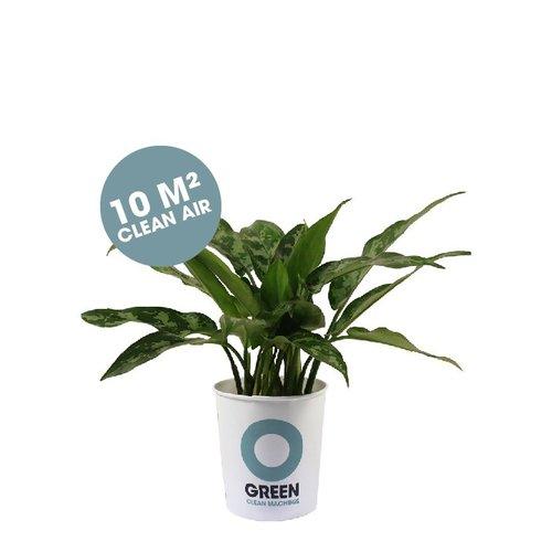 Ogreen Ogreen Survivor clean machine  10 m2 clean air*