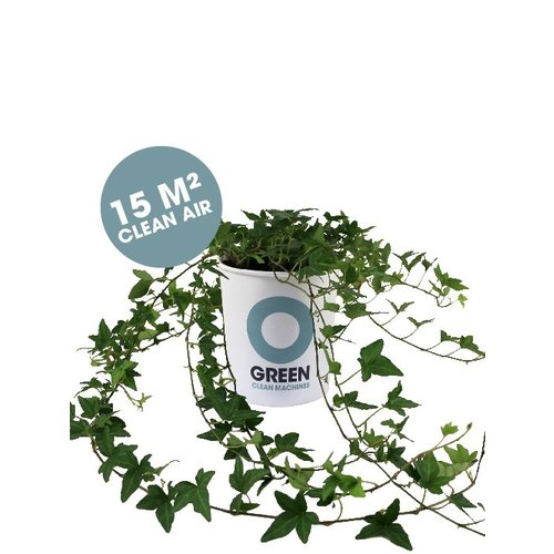 Ogreen Ogreen Goddess clean machine  15 m2 clean air*