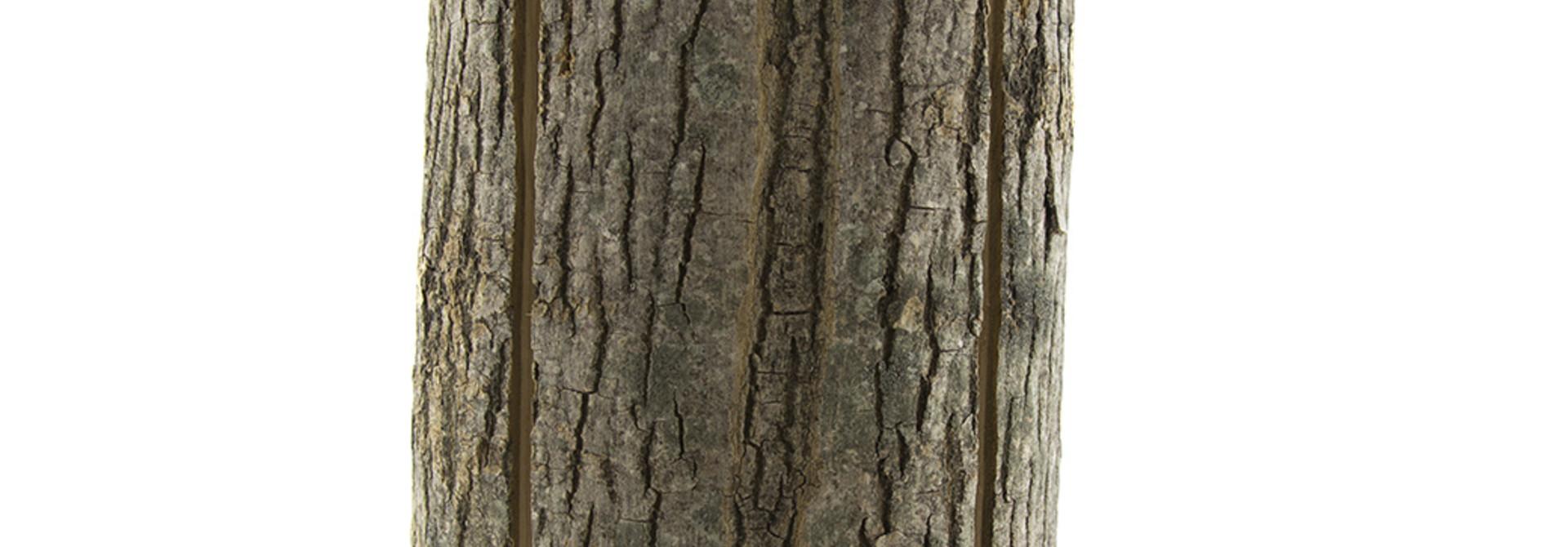 Wood Light - Ash Wood L