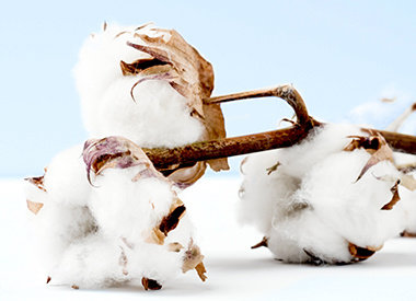 Baumwolle – das Material