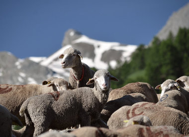 • Merino d'Arles – Bio-Merino mulesingfrei • Rosy Green Wool