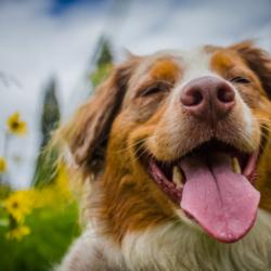 Alles voor je Hond