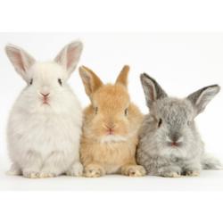 Knaagdier/konijn/fret