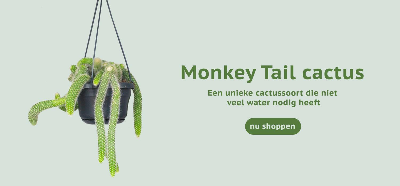 Monkeytail