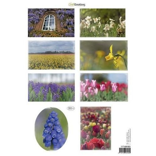 CraftEmotions 117140/1003 - CraftEmotions Knipvellen voorjaarsbloemen 3 mix A4 160 grm