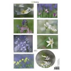 117140/1004 - CraftEmotions Knipvellen voorjaarsbloemen 4 paars, blauw A4 160 grm