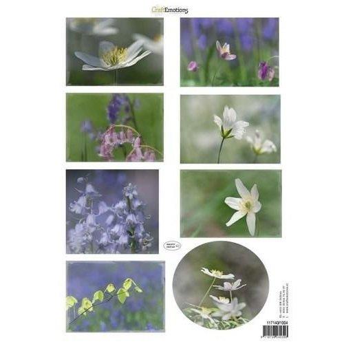 CraftEmotions 117140/1004 - CraftEmotions Knipvellen voorjaarsbloemen 4 paars, blauw A4 160 grm