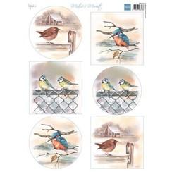 MB0197 - Matties mooiste vogels in de winter