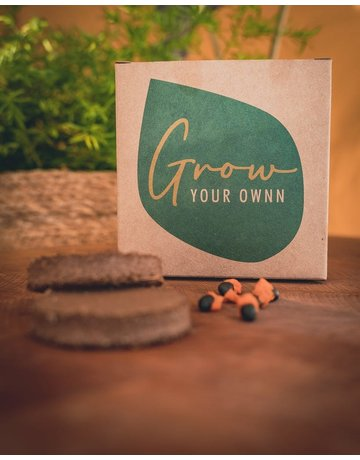 Grow your ownn: Camellia Sinensis