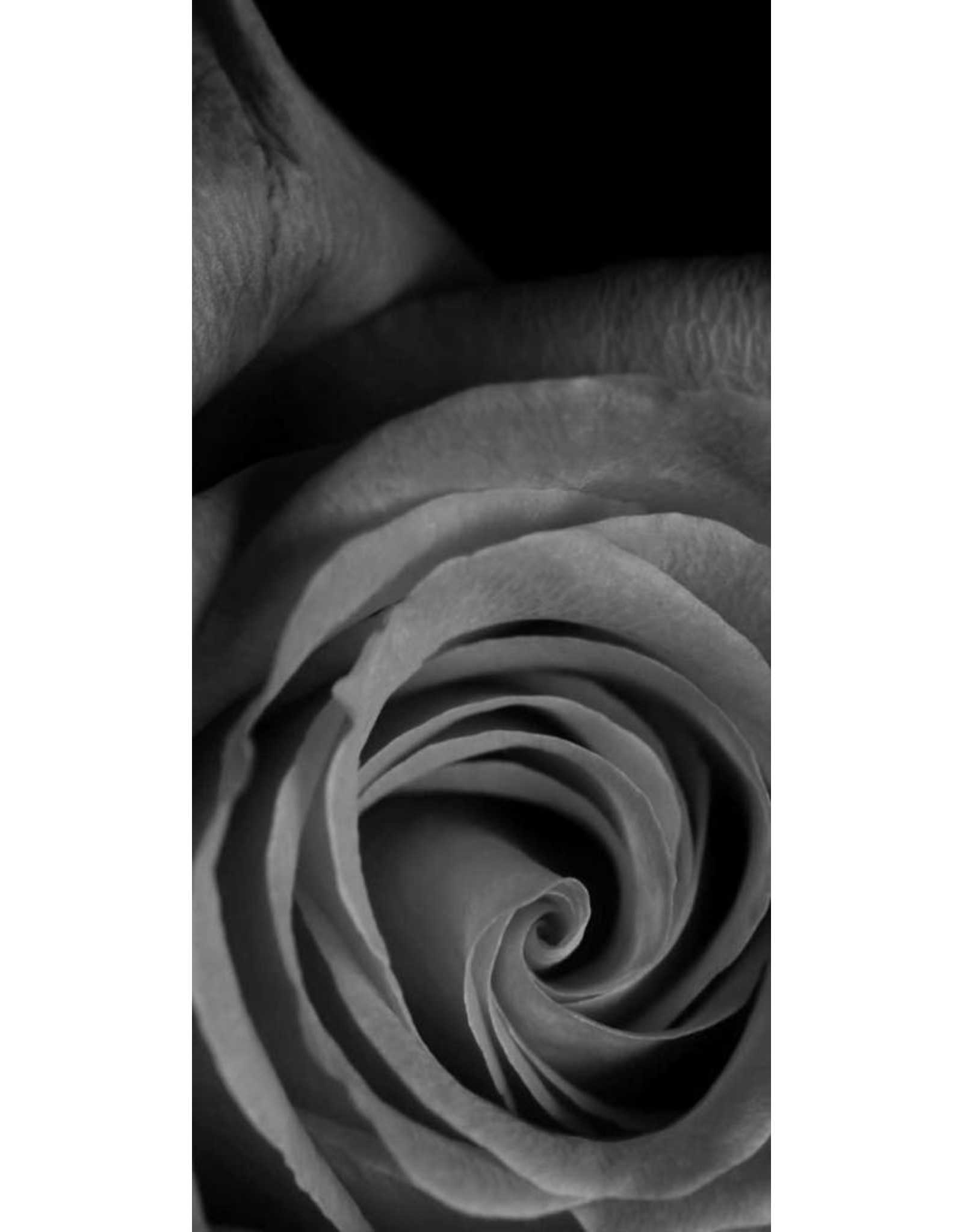 "the shoe-tattoo the shoe-tattoo ""rose GREY"""