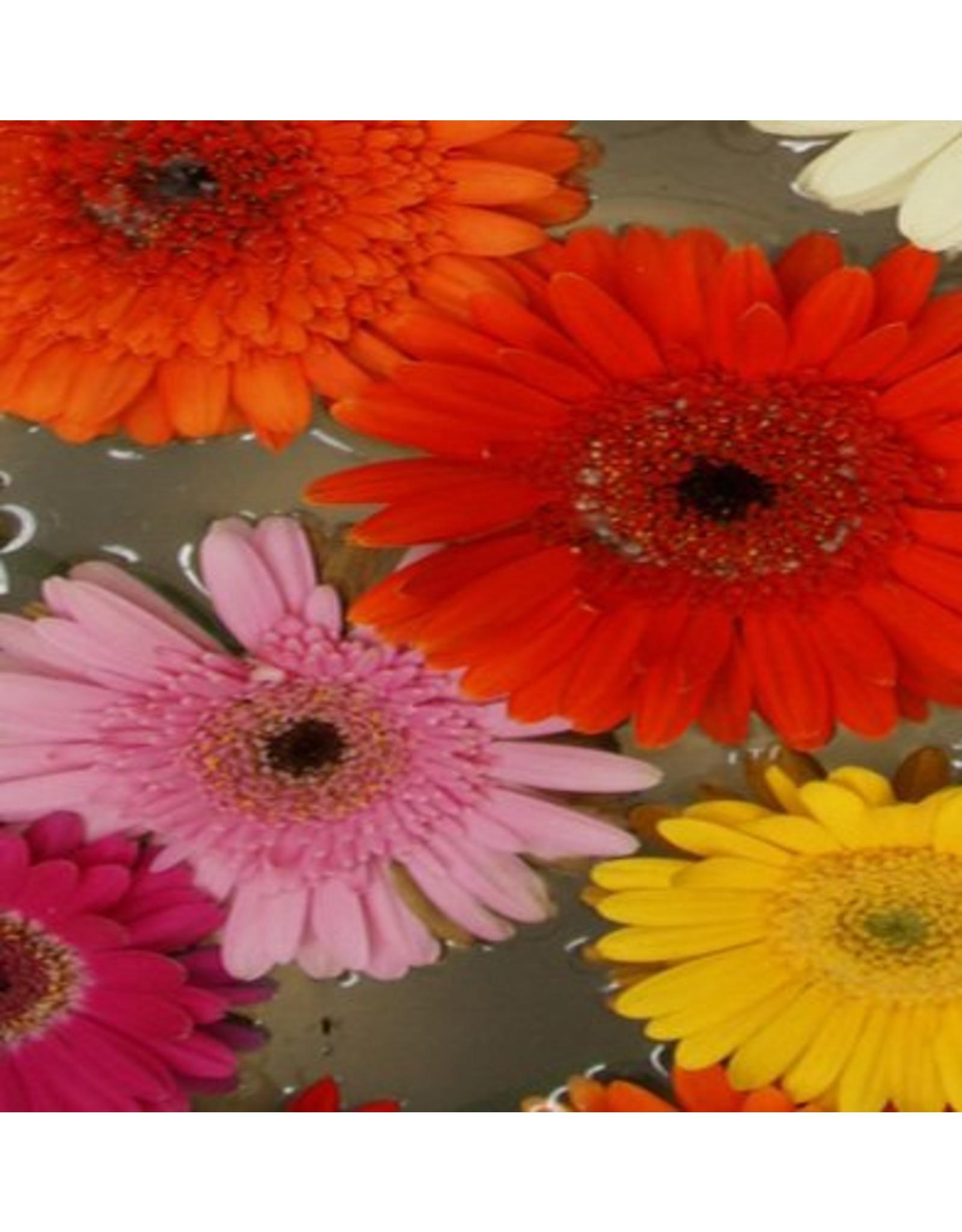 "the shoe-tattoo the shoe-tattoo ""flowers COLORFUL"""