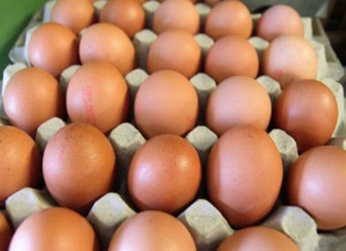 Zuivel en eieren