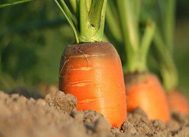 Groenten en aardappelen