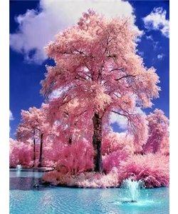 Diamond Painting 40x50cm. Bomen in bloei roze
