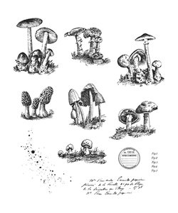 Tim Holtz Cling Stamp Tiny Toadstools