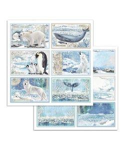 Stamperia Paper 12x12'' Arctic Antarctic Cards