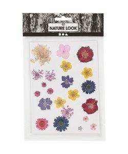 Nature Look Gedroogde Bloemen & Bladeren Roze/Paars/Geel/Blauw