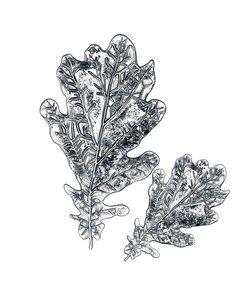 Sizzix 3D Impresslits Cut & Emboss Oak Leaf