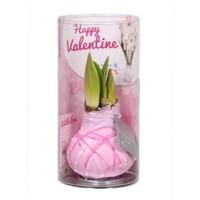 Amaryllis Wax Happy Valentine Art pink