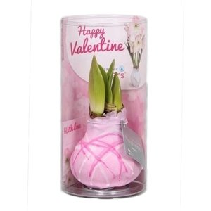 Amaryllis Wax Happy Valentine Art pink