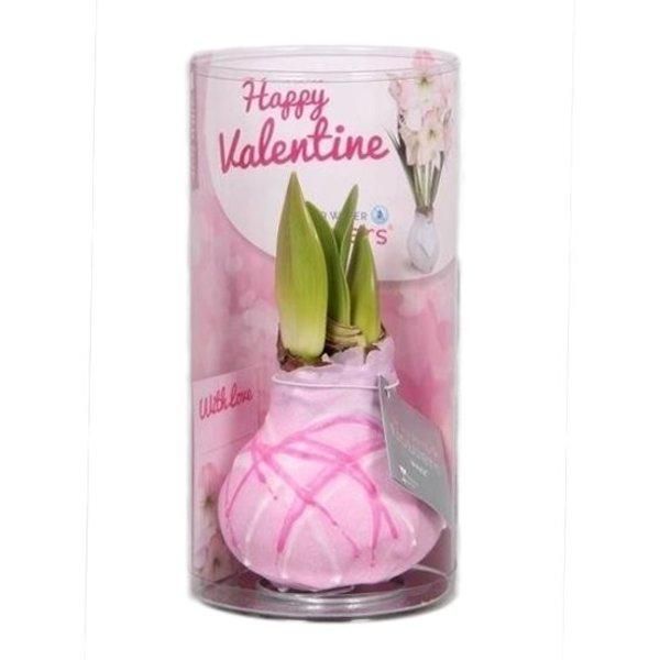 Amaryllis Cire Happy Valentine Art rose