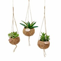 Kokodama Succulents mixed 8 types of hang
