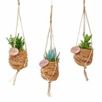 Kokodama Succulent plants 8 types of hanging mini