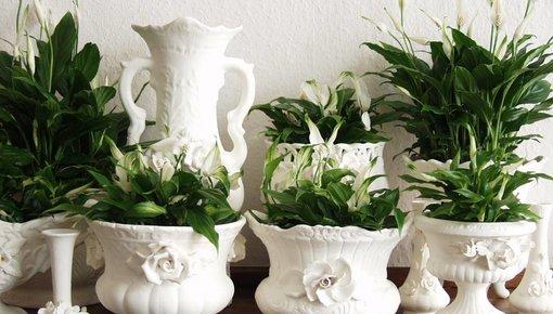Luftreinigungspflanzen