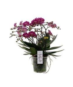 Bellissimo - 100 + flowers !!