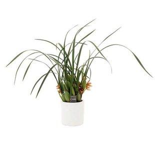 malibu in decorative pot - smells nice!