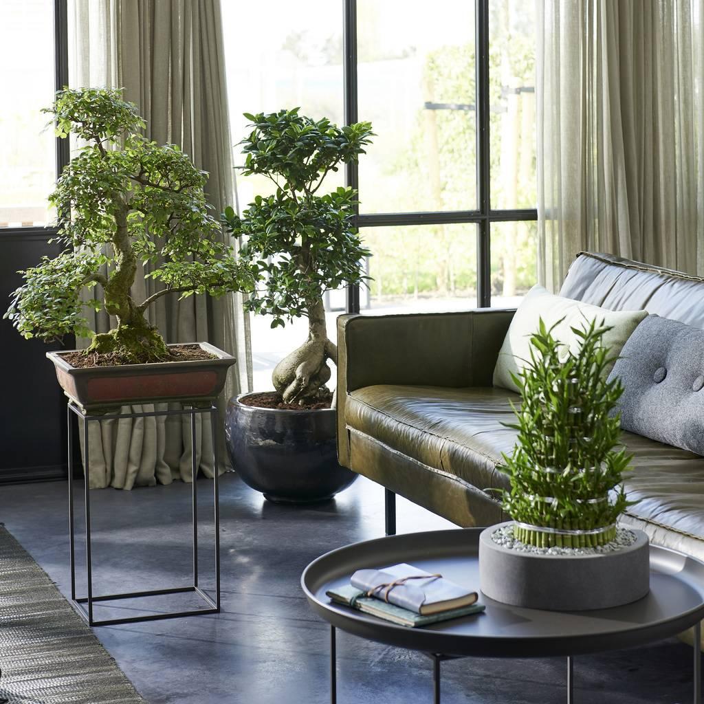 Zenplants: Zimmerpflanzen des Monats Mai