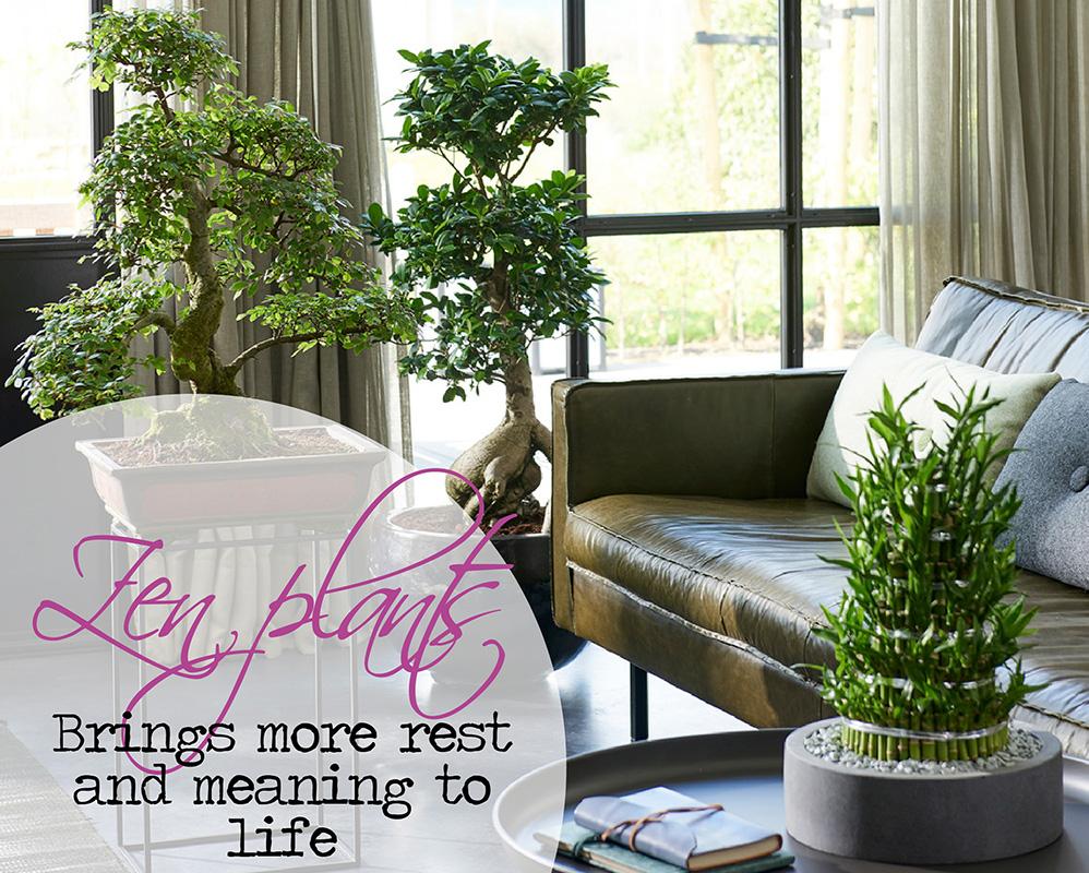 Best quality plants online! banner 1