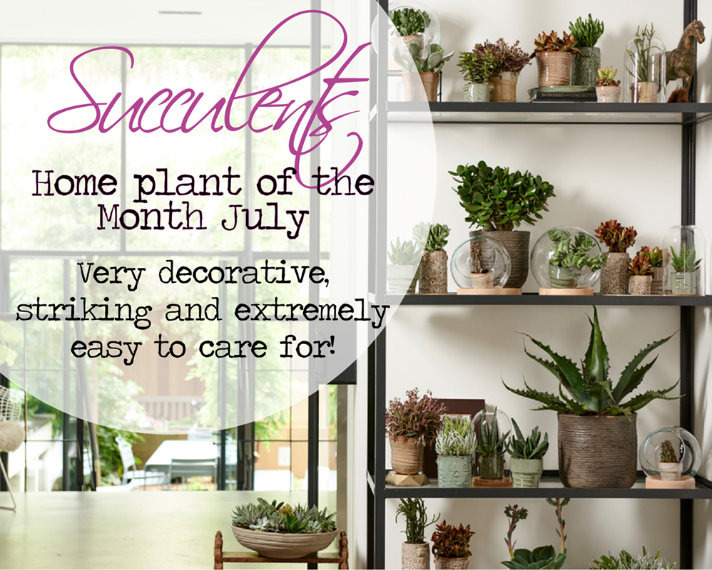 Acheter des plantes d'intérieur haut de gamme ! banner 1