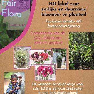 Fair Flora