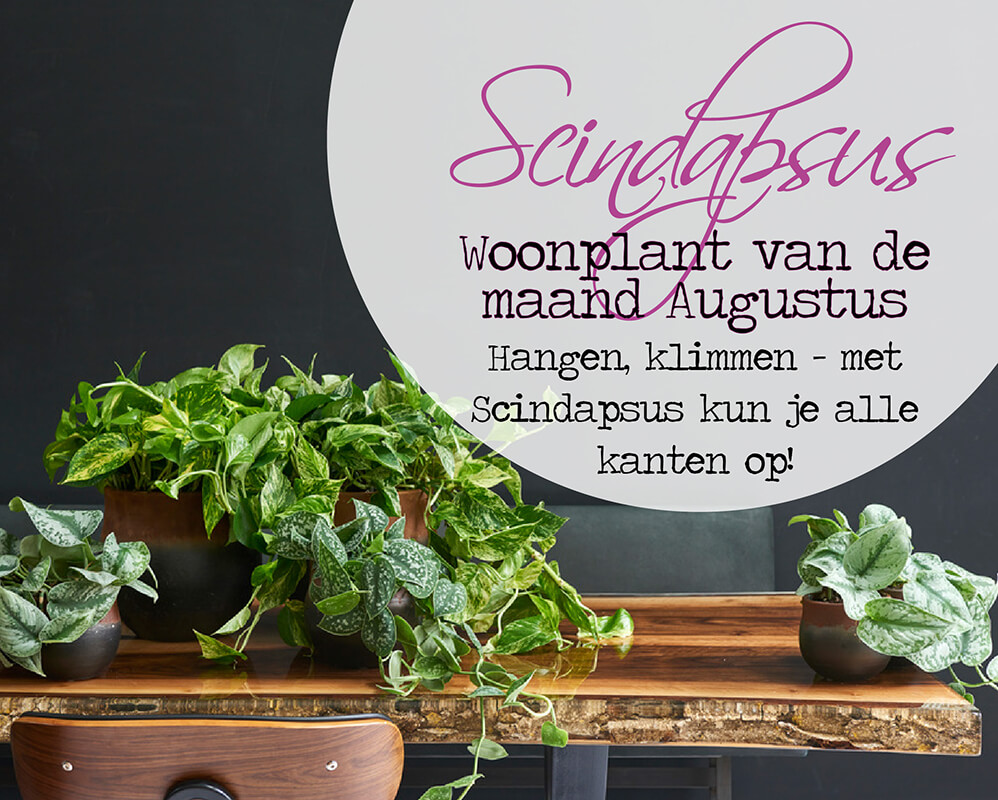 Topkwaliteit planten kopen! banner 1