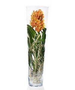 Lisanne in dik glas 90 cm