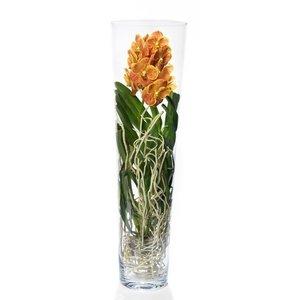 Vanda Lisanne in thick glass 90 cm