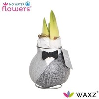 Amaryllis No Water Flowers Waxz® Giletz Bow Tie