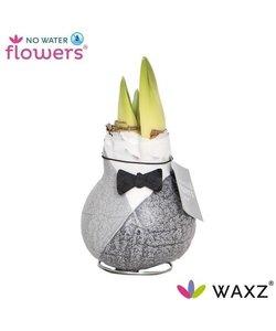 No Water Flowers Waxz® Giletz  Vlinderdas