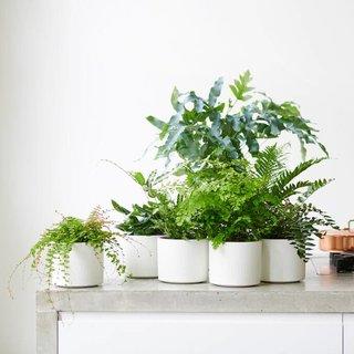 Plante d'intérieur du mois