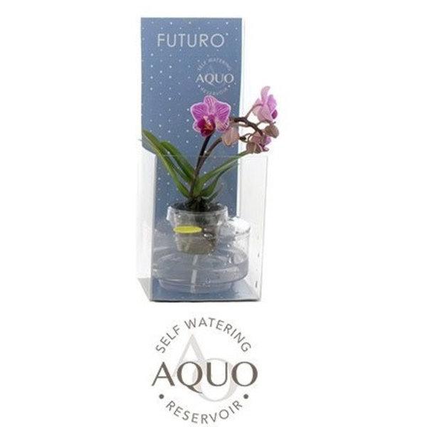 Phalaenopsis Weltraum-Bewässerungssystem Futuro