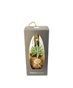 Succulent Gift Package