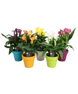 gemengd In lofly pot - 5+ bloemen