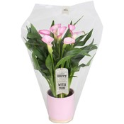 Zantedeschia Calla julia ceramic + label - 5 + flowers