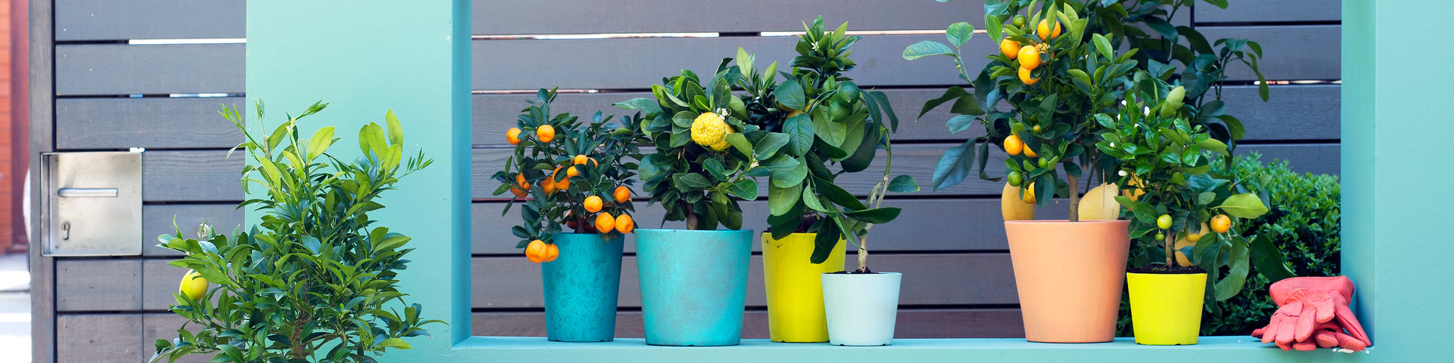 Buy best quality plants online! banner 3
